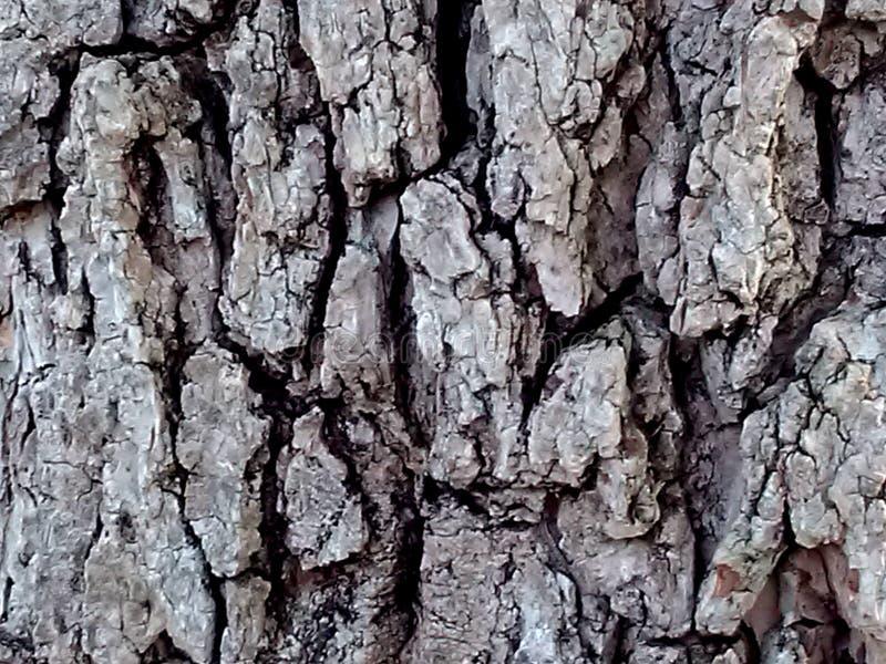 纹理、树的摘要、树干或岩石, I ` m不肯定 库存图片