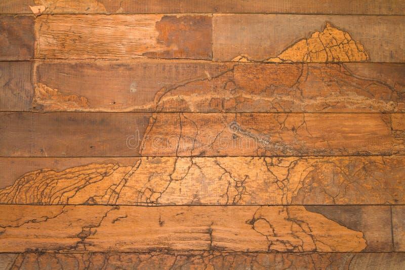 纹理墙壁木头白蚁 免版税库存照片