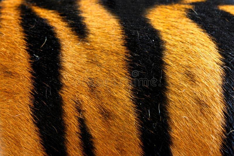 纹理实际老虎皮肤(毛皮) 免版税库存照片