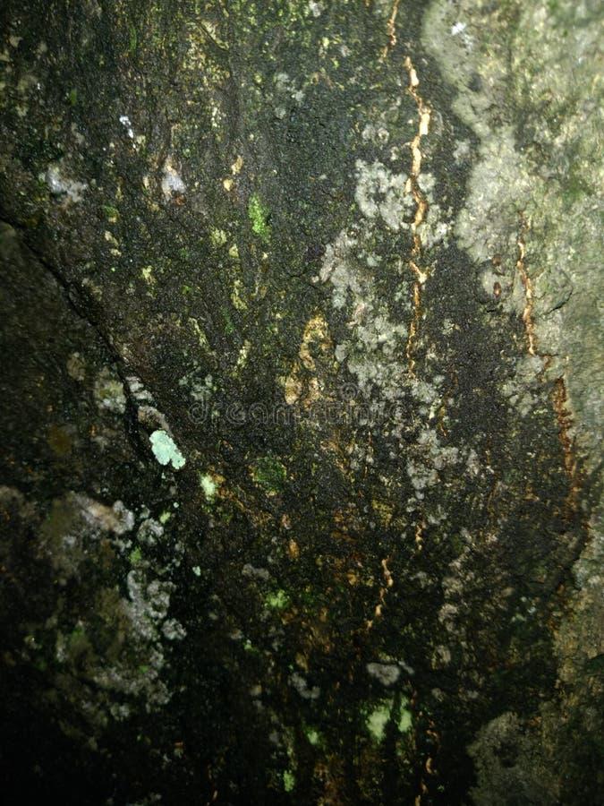 纹理树 免版税图库摄影