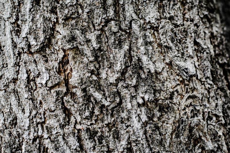 纹理的树背景 免版税图库摄影