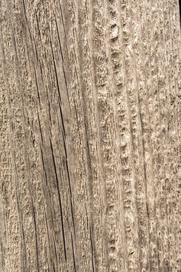 纹理老烘干被风化的破裂的木头,沿日志,特写镜头抽象背景纤维的镇压  免版税库存图片