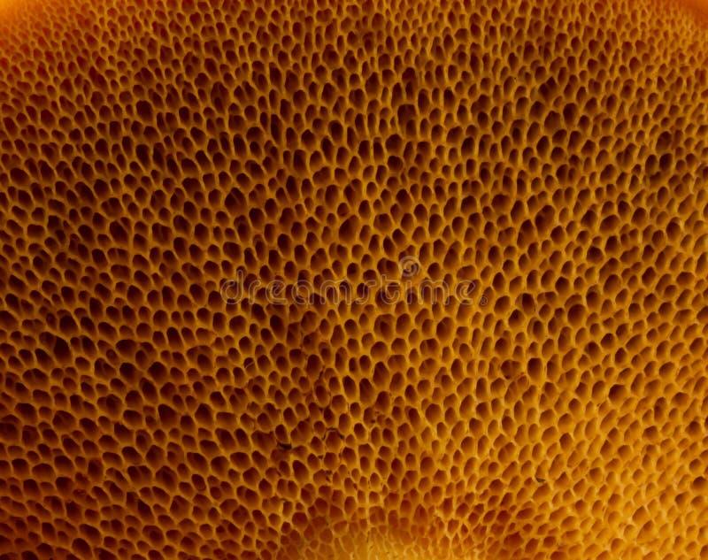 纹理蘑菇 库存照片
