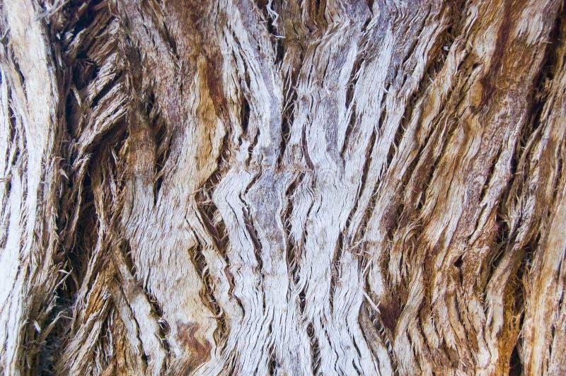 纹理被烧的树干在森林里 免版税库存图片