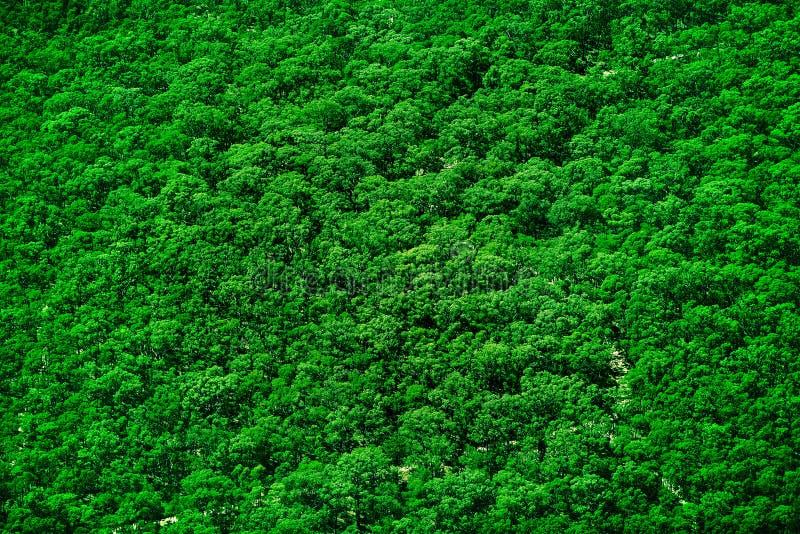 纹理顶部结构树 免版税图库摄影