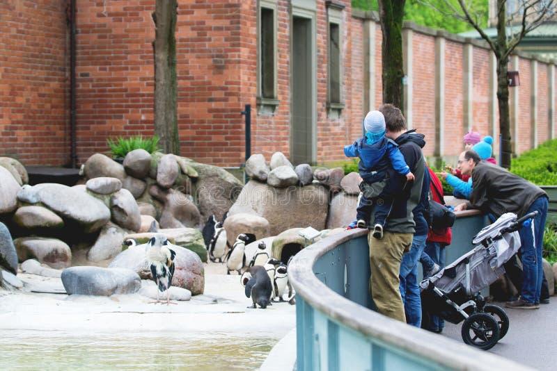 纽伦堡,德国,2016年4月:有参观动物园纽伦堡的孩子的父母 人观看的企鹅和苍鹭 免版税图库摄影