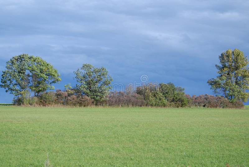 纽约上州草甸路旁视图有树篱的在对高大的树木之间,有蓝天背景 库存图片