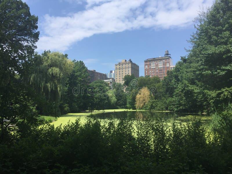 纽约中央公园池塘 免版税图库摄影