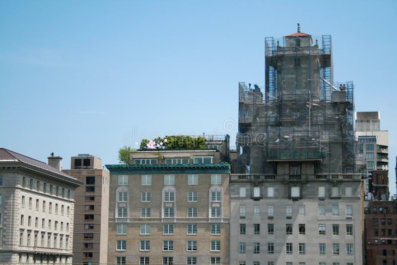 纽约摩天大楼的屋顶的植物  免版税库存图片