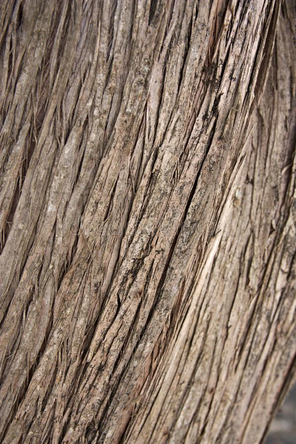 线在一棵老树的吠声表示 库存图片