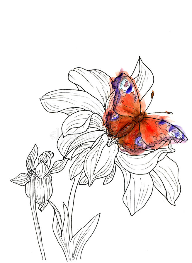 排行大丽花花墨水图画与蝴蝶的 在白色背景的黑等高与水彩飞溅 id.