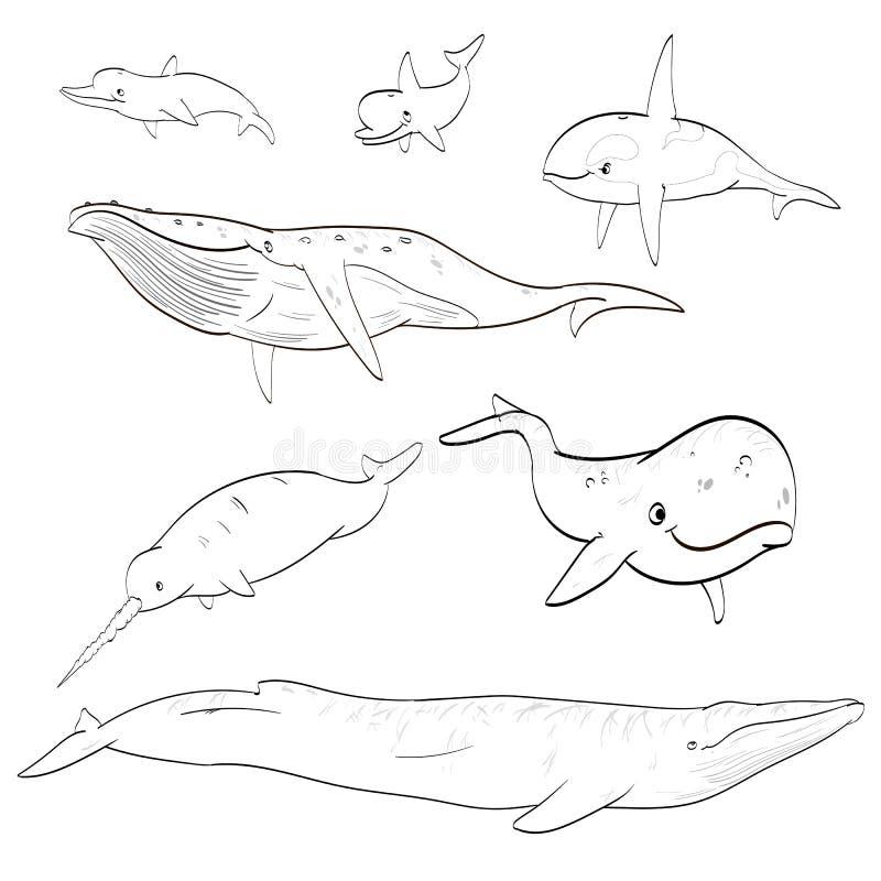 线描动画片鲸鱼汇集 库存例证