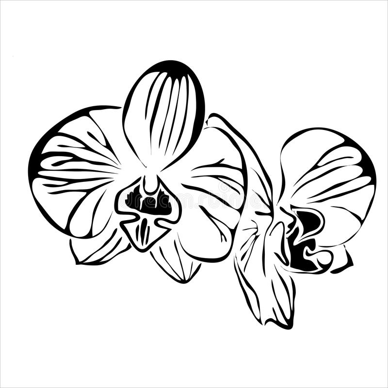线花兰花传染媒介图象 向量例证