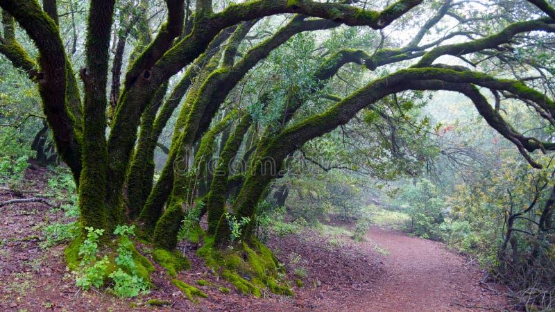 线索在森林 库存照片