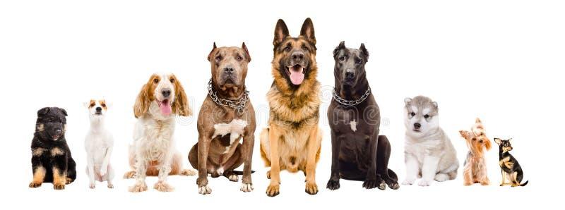 组不同的品种狗 免版税库存图片