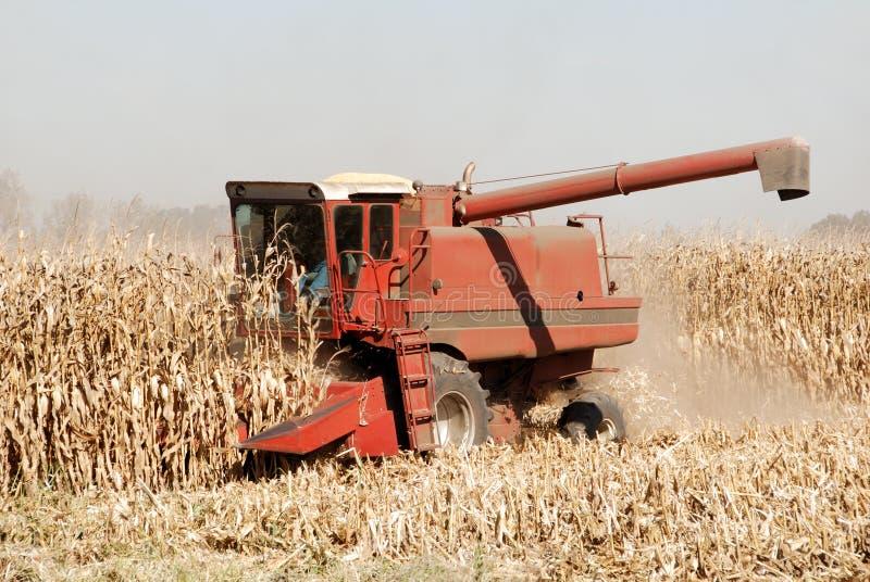 组合玉米 库存照片