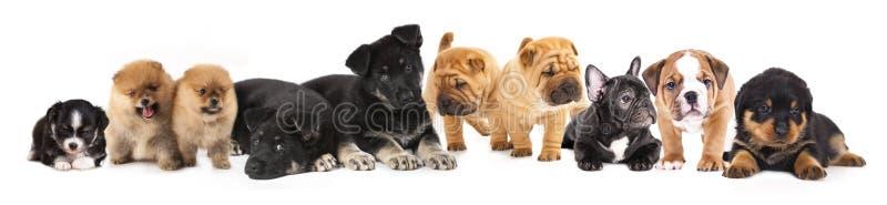 组小狗 免版税库存照片