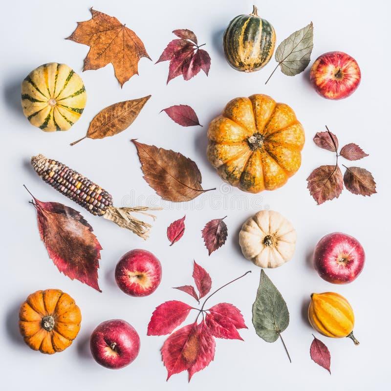 组成用南瓜、玉米、苹果和叶子的秋天在轻的背景,顶视图 秋天样式由自然有机农厂PR制成 免版税库存照片