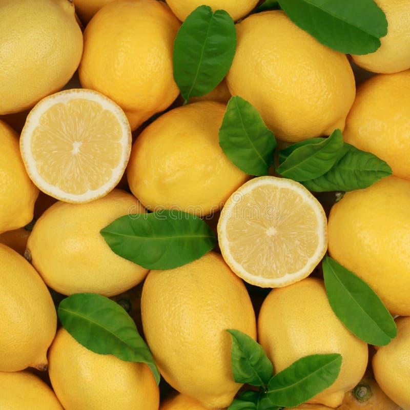 组柠檬 库存图片