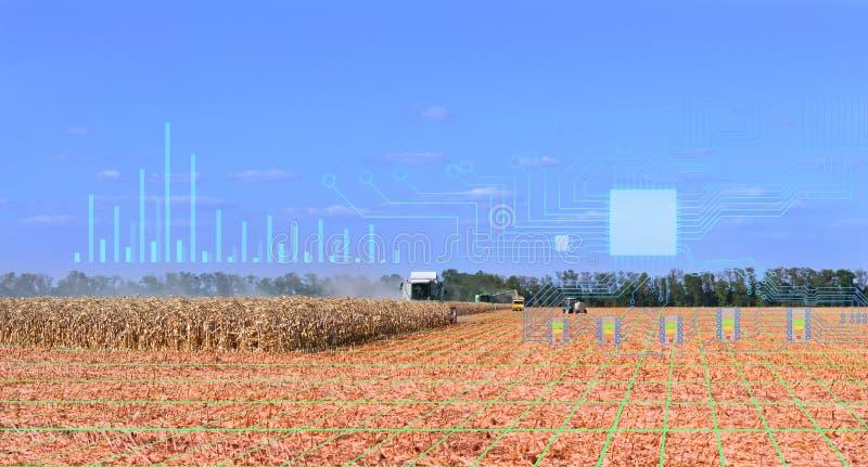 组织收割,使用物联网技术提高生产力并降低人工成本 库存照片