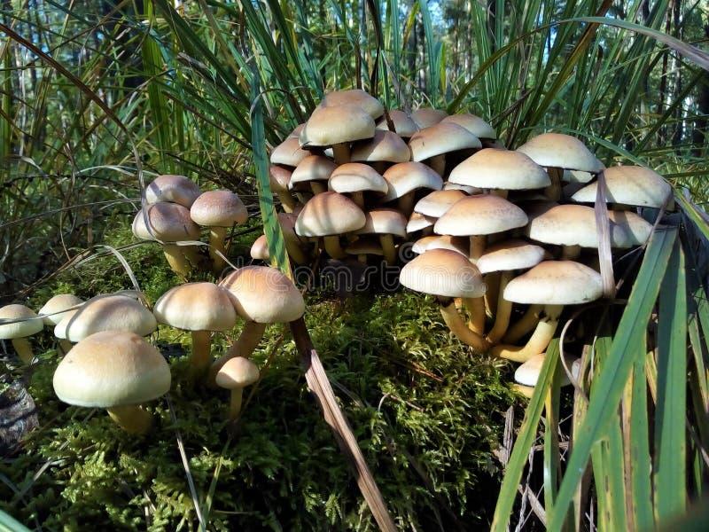 组蘑菇 免版税库存图片