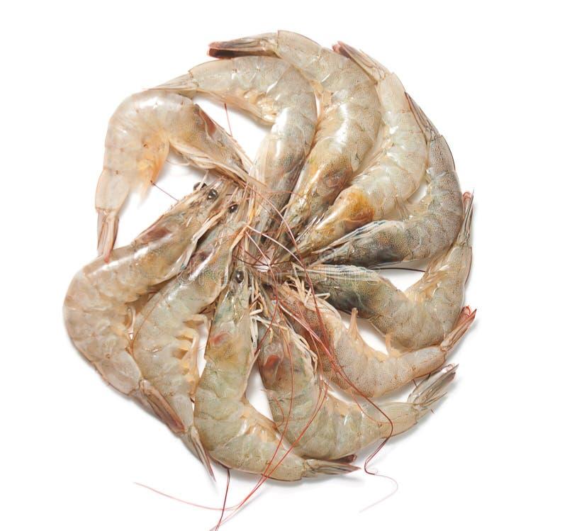 组虾 免版税图库摄影