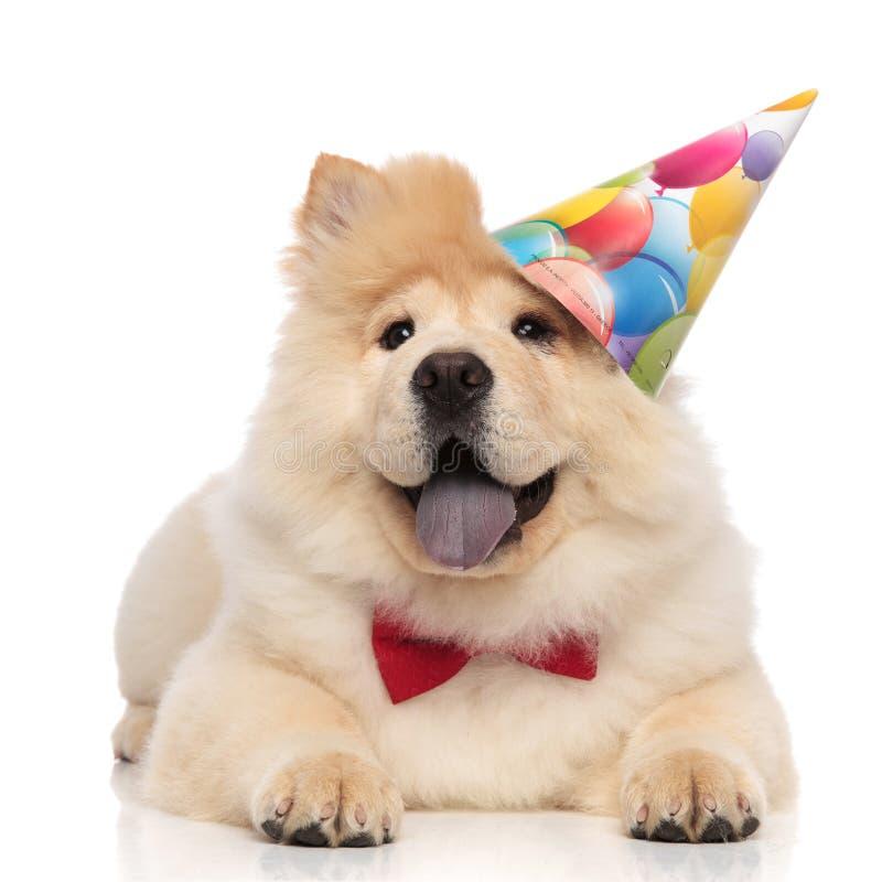 绅士中国咸菜佩带的生日盖帽查寻支持 免版税库存图片