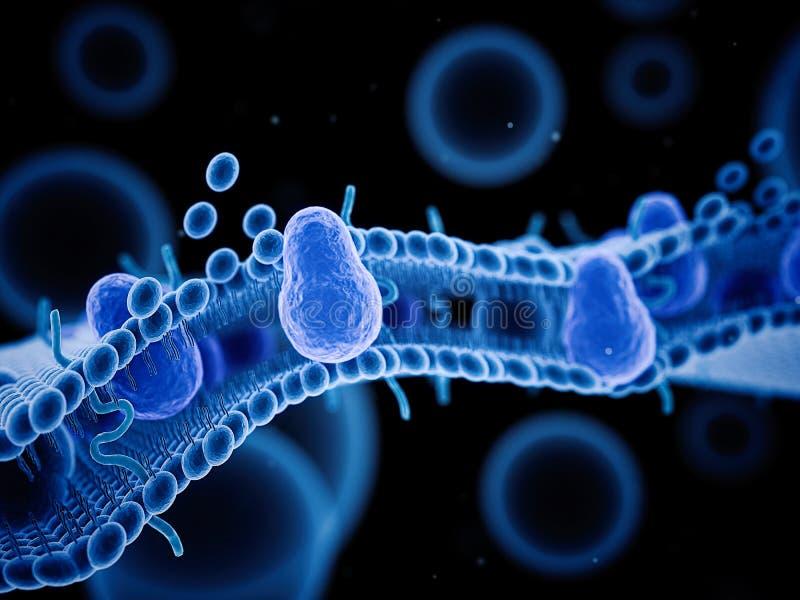 细胞膜 皇族释放例证
