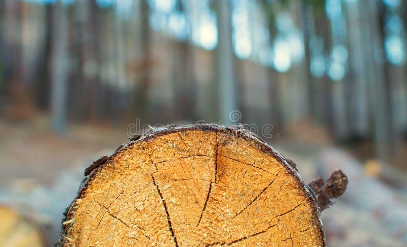 细节树干 库存图片