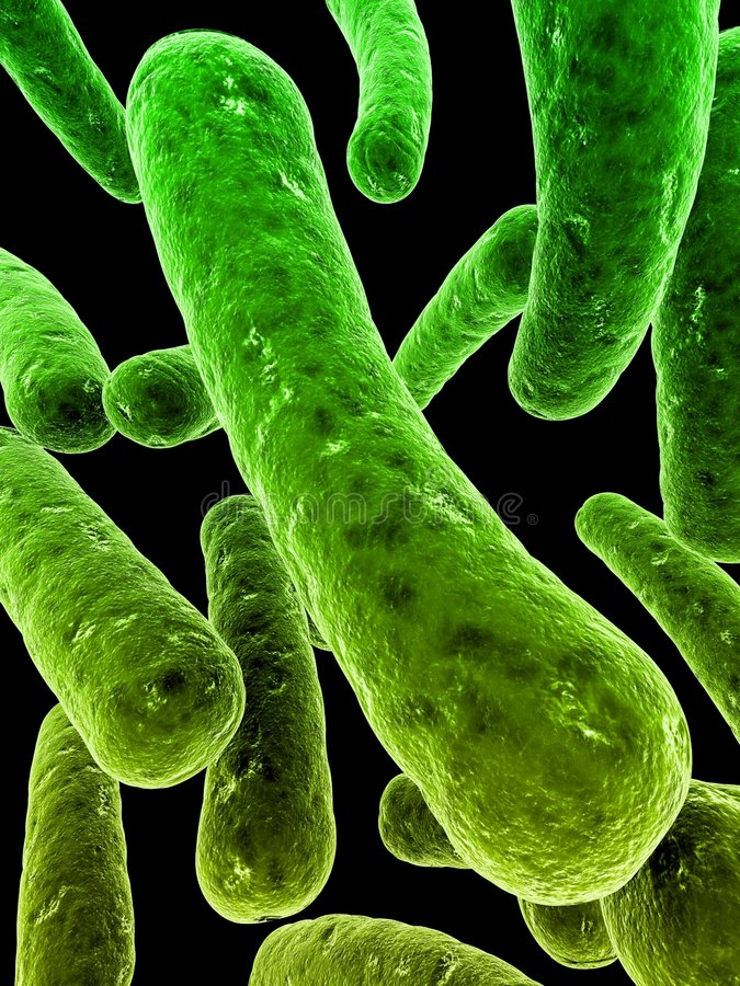 细菌 皇族释放例证
