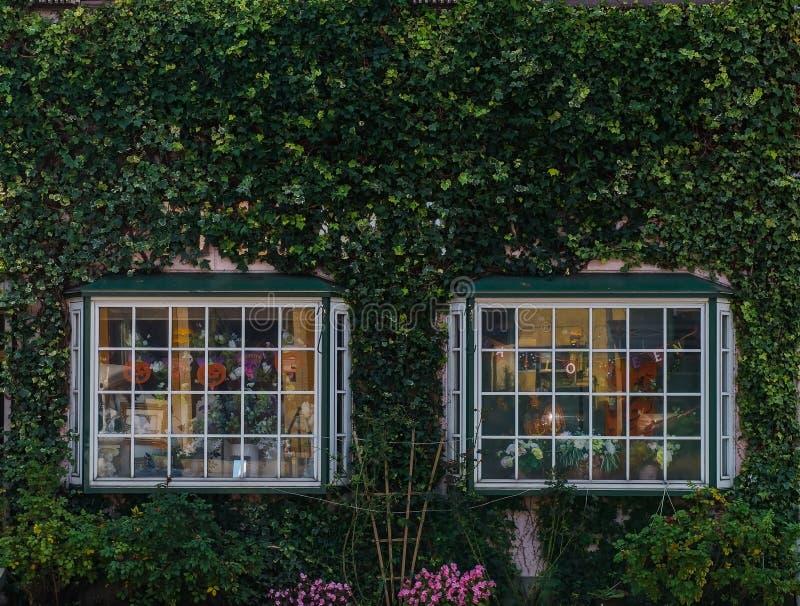 经典大厦和绿色常春藤窗口和万圣夜 库存照片