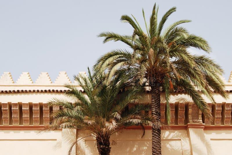 经典摩洛哥建筑学,有棕榈树的墙壁 免版税库存照片