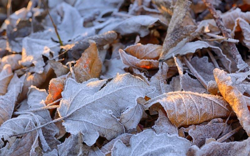 结冰的秋天留下背景 库存照片