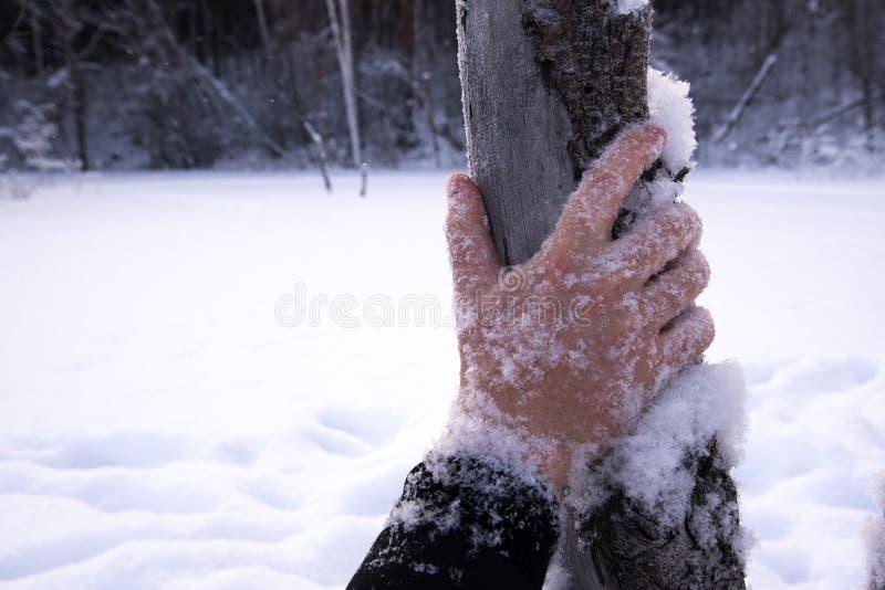 结冰,手,寒冷 库存照片