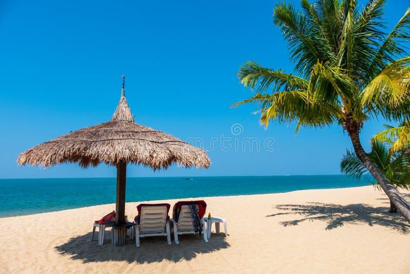 结合在热带海滩的海滩睡椅和可可椰子树有海和天空蔚蓝背景 免版税库存照片