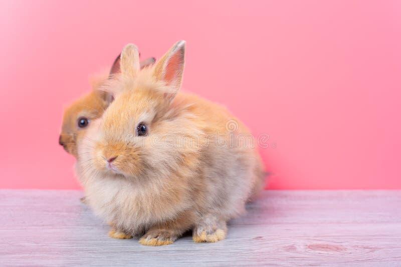 结合小浅褐色的逗人喜爱的小兔停留在灰色木桌上有桃红色背景 免版税库存照片