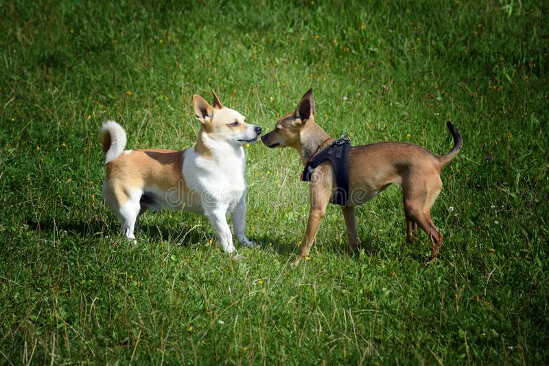 结合狗 免版税库存图片