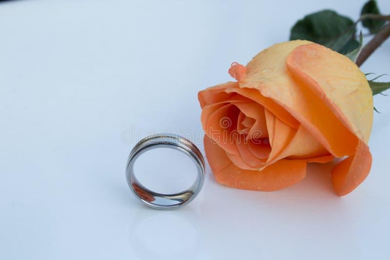 结婚戒指被镀铬的和橙色玫瑰,在白色背景 库存照片