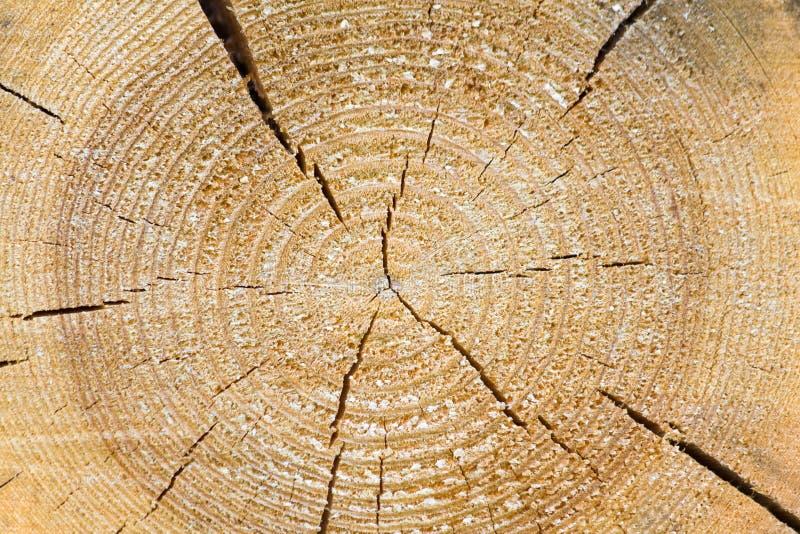 结尾杉木被锯的纹理 库存图片