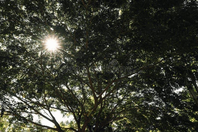 结构树分行 免版税库存图片