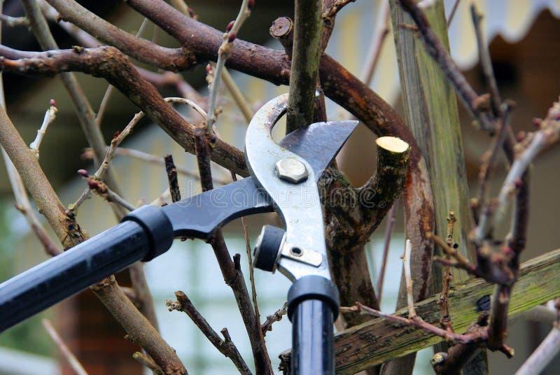 结构树剪切 库存照片