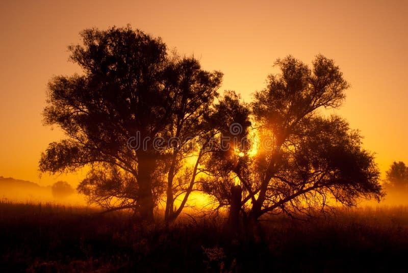 结构树剪影在由后照的橙色日出的。 免版税库存图片