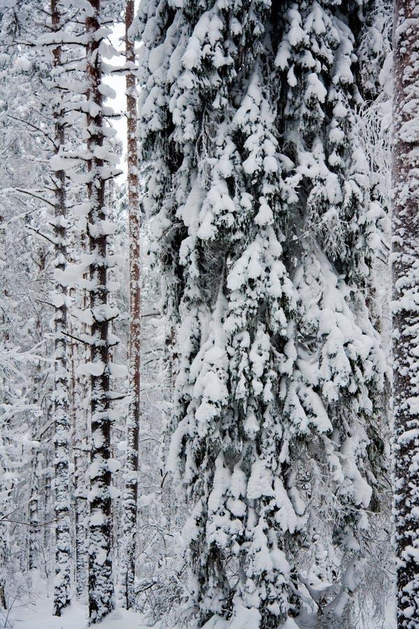 结构树包括雪 免版税库存图片