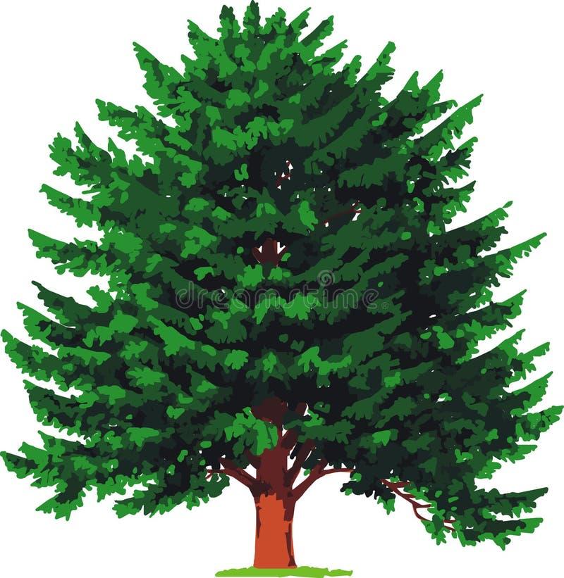 结构树向量赤柏松 库存例证