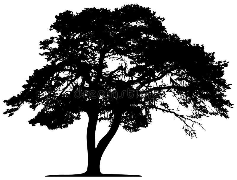 结构树向量 库存例证