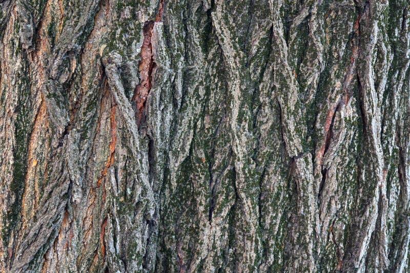 结构树吠声 库存图片