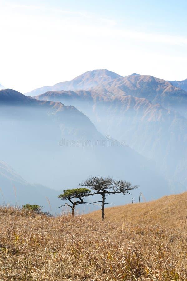 结构树和山 免版税库存照片