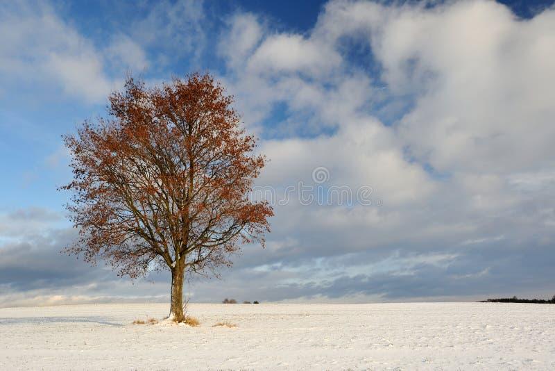 结构树在冬天 库存照片