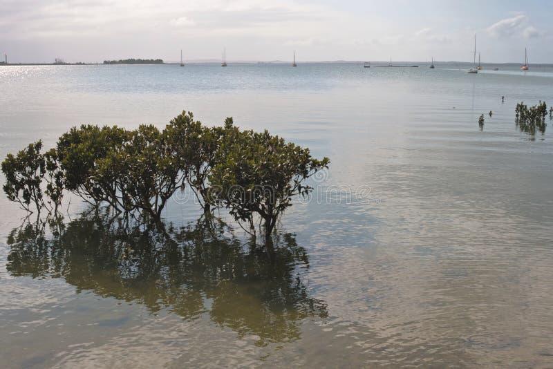 结构树在海滨广场的水域中 免版税库存照片