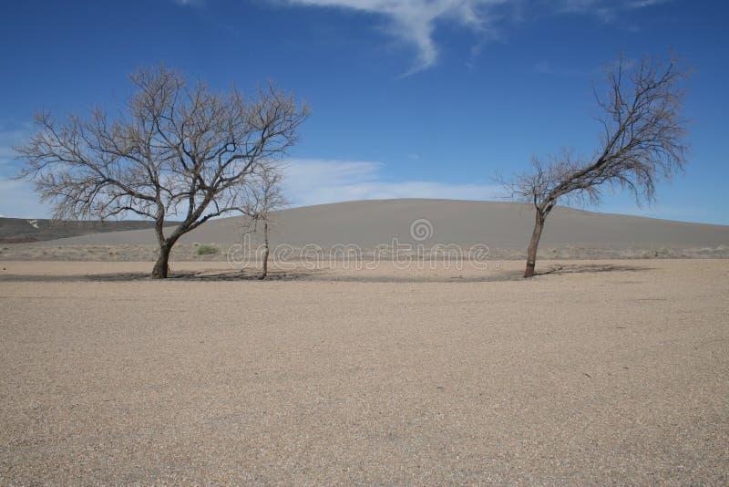 结构树在爱达荷沙漠 库存图片